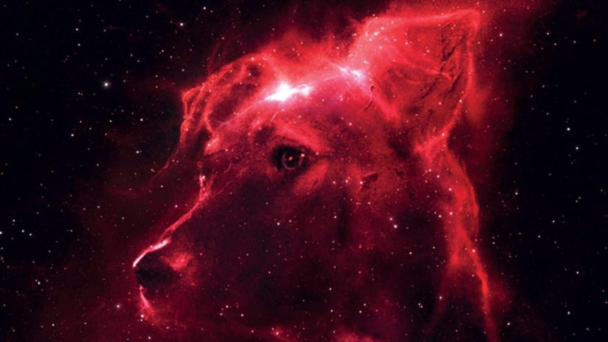 Space Dogs, Filmstart, John Gürtler